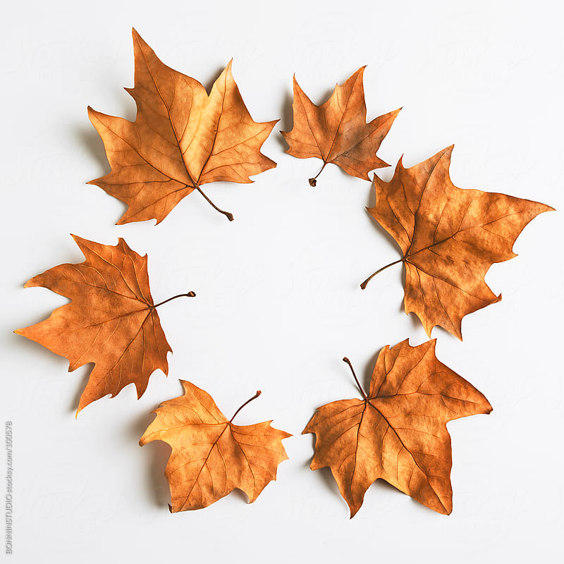 Maple Leaf composition. Autumn. by BONNINSTUDIO for Stocksy United