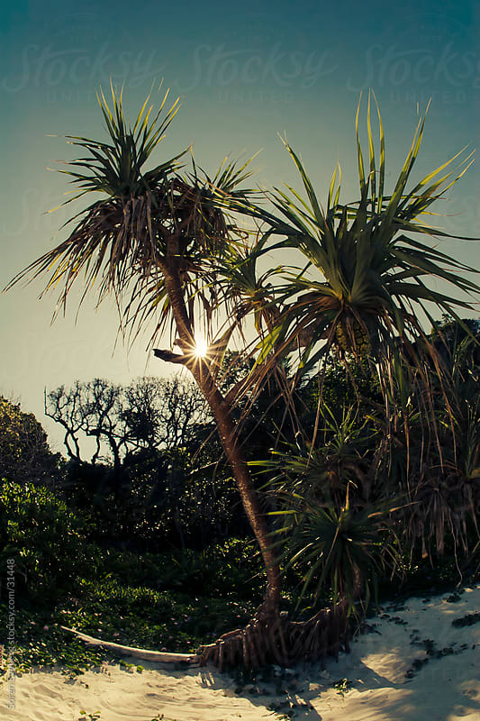 Tropical palm trees on the beach with sun burst coming through the leaves by Soren Egeberg for Stocksy United