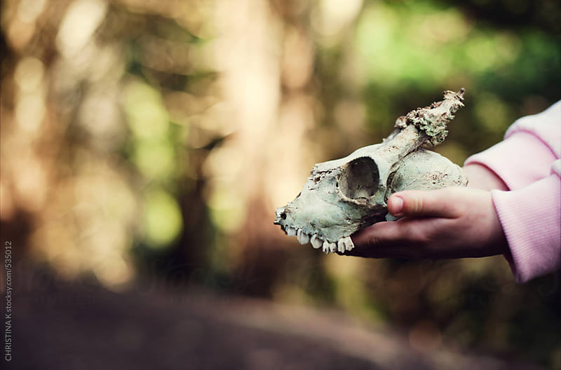 Child holding a Deer skull by CHRISTINA K for Stocksy United