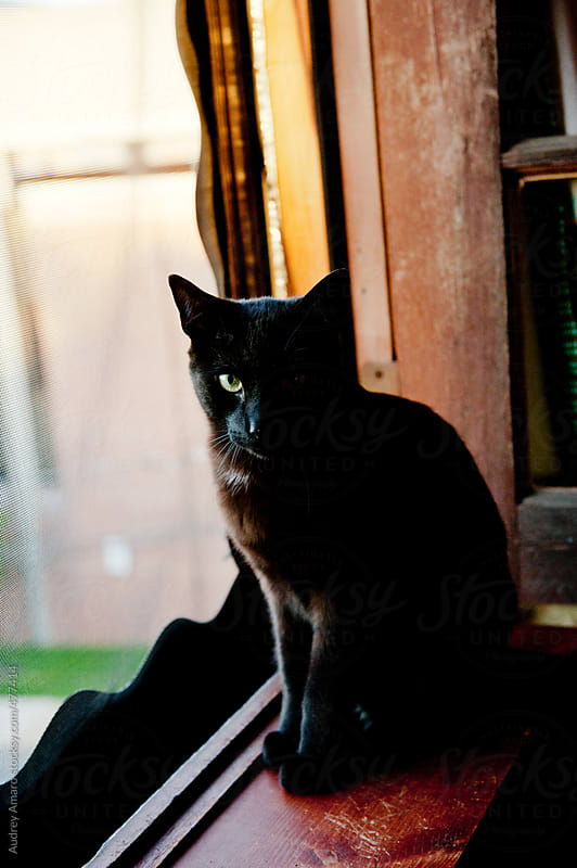Black cat sits on a windowsill by Audrey Amaro for Stocksy United