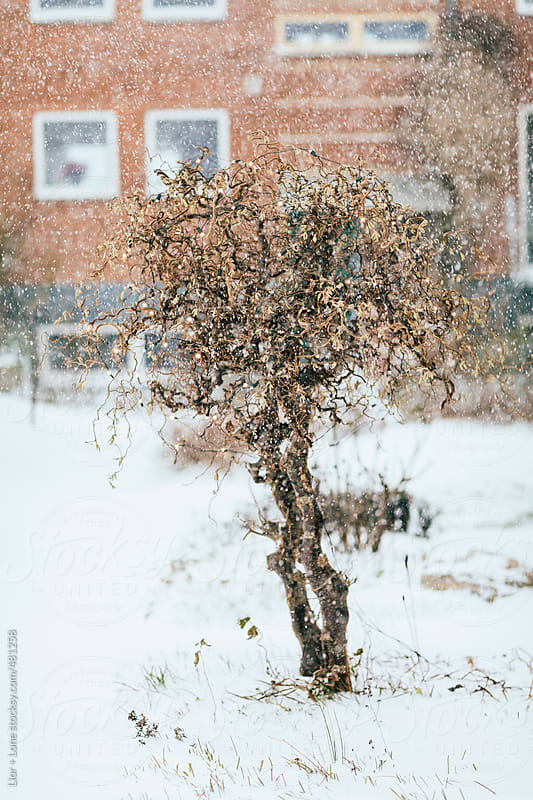 Small strange miniature tree with christmas lights under a snow storm by Lior + Lone for Stocksy United