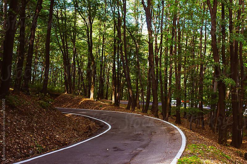 Asphalt Road Through the Woods by Branislav Jovanović for Stocksy United