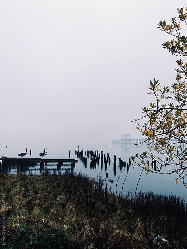 Foggy Marsh by Kevin Gilgan for Stocksy United