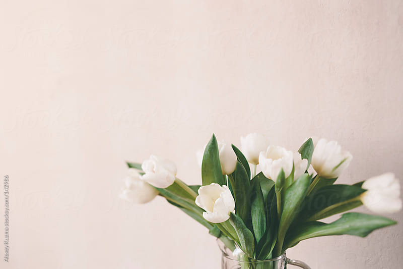 white tulips by Alexey Kuzma for Stocksy United