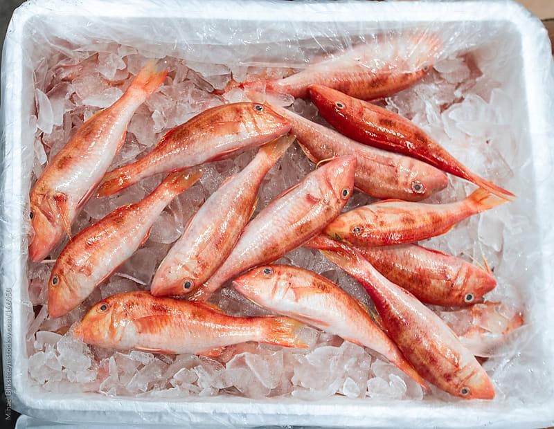 Fresh fish (goatfish) for sale at a fish market by Mihael Blikshteyn for Stocksy United