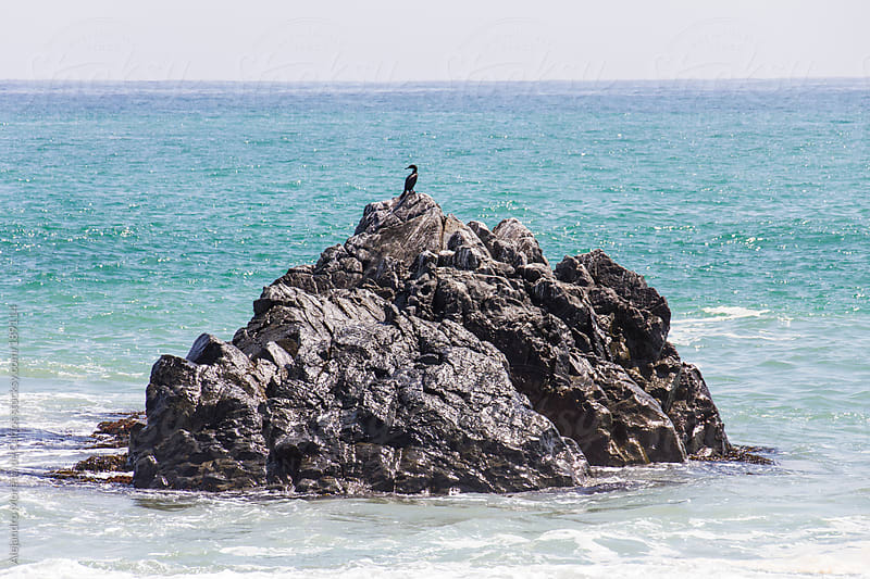 Islet of rock with a bird in the middle of turquoise sea by Alejandro Moreno de Carlos for Stocksy United