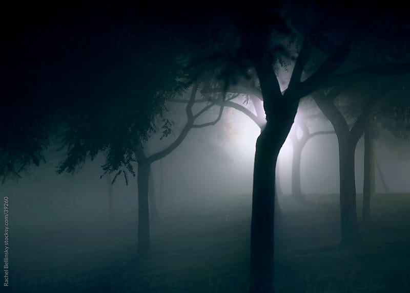 Spooky tree silhouettes against a foggy white light by Rachel Bellinsky for Stocksy United