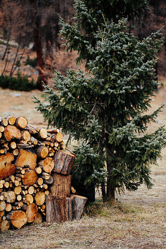 Firewood and a pine tree by Giada Canu for Stocksy United