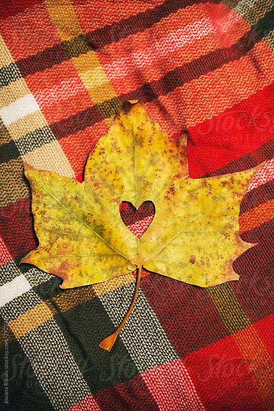Heart in a leaf by Jovana Rikalo for Stocksy United