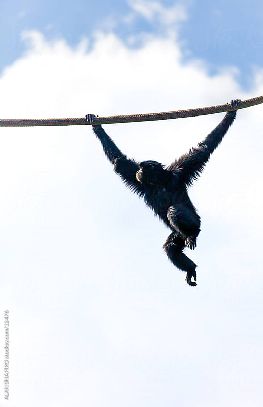 Swinging by alan shapiro for Stocksy United
