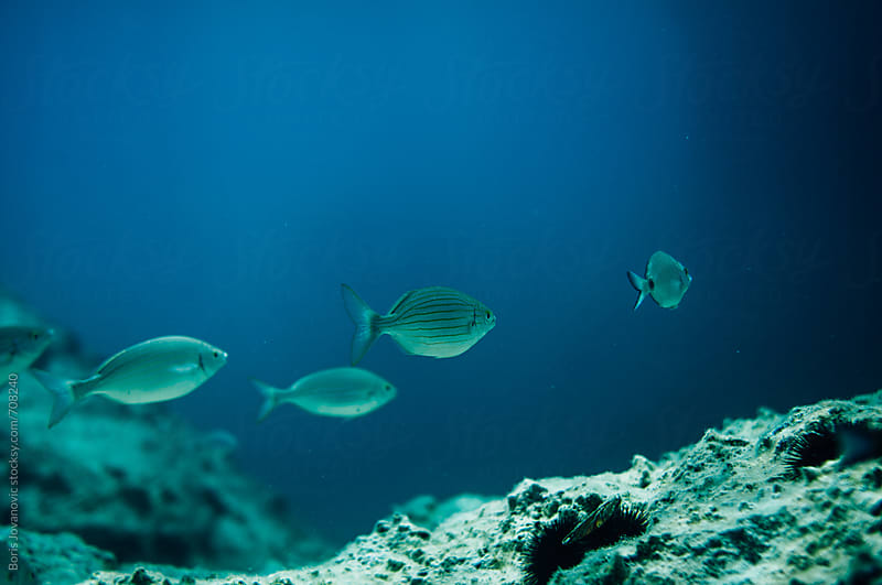 Group of fish passing through  by Boris Jovanovic for Stocksy United