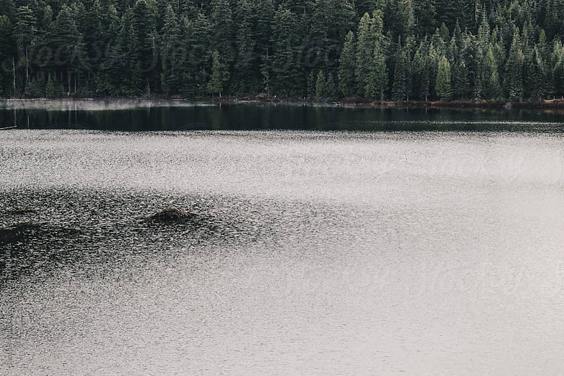 Beaver lodge on mountain lake by Justin Mullet for Stocksy United
