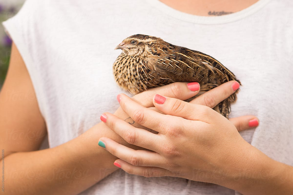 Woman Holding In Her Hands A Baby Quail Stocksy United