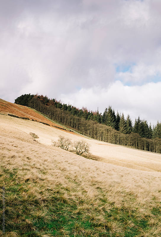 Trees on a sunlit hillside. Derbyshire, UK. by Liam Grant for Stocksy United