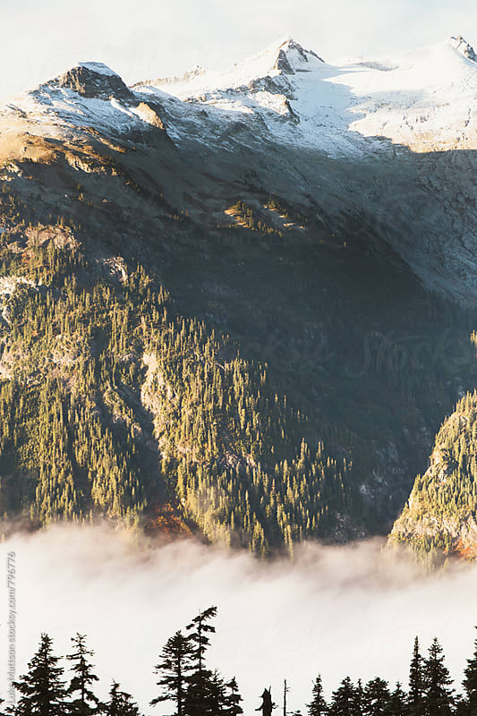 Snowy Mountain Cap And Rolling Fog Above Subalpine Forest by Luke Mattson for Stocksy United