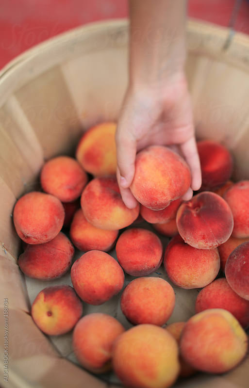 Picking Peaches by ALICIA BOCK for Stocksy United