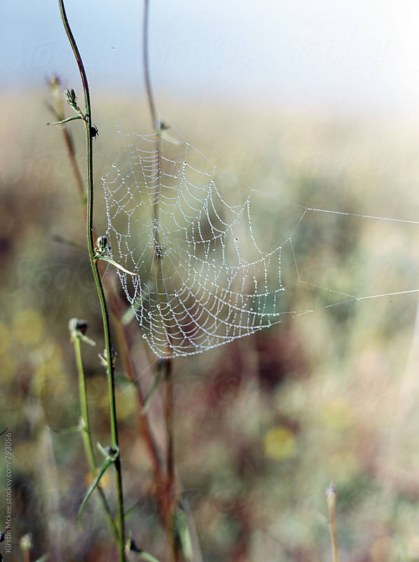Dew on cobweb by Kirstin Mckee for Stocksy United