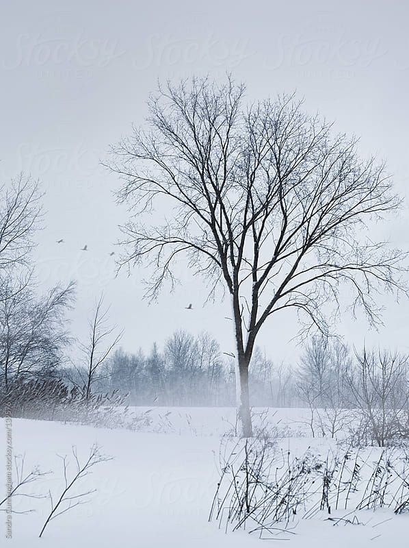 Winter rural country scene by Sandra Cunningham for Stocksy United