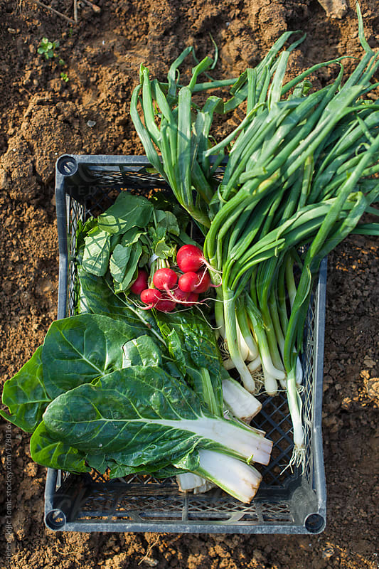 Spring vegetables from the garden by Jelena Jojic Tomic for Stocksy United