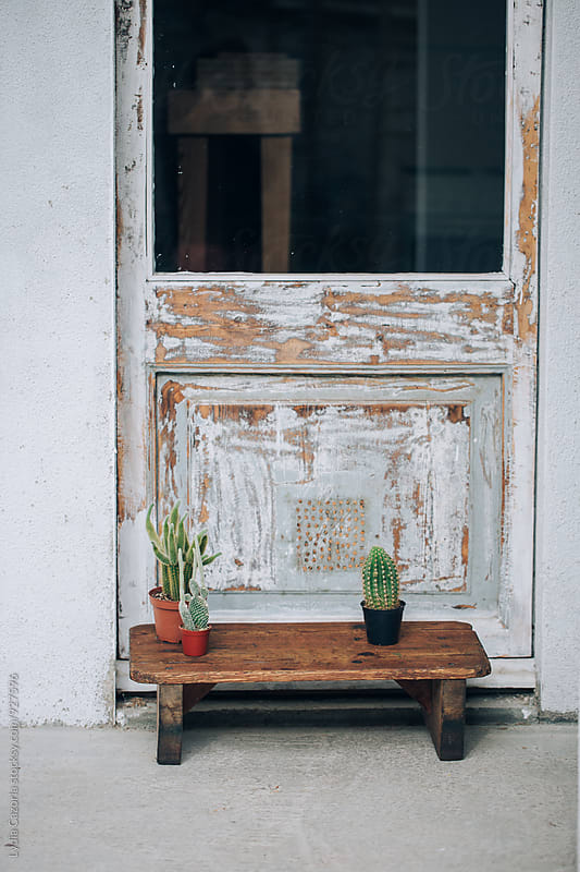 An old wooden bench with cactus by Lydia Cazorla for Stocksy United
