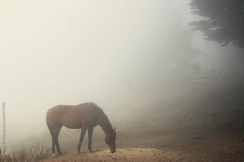 Horse standing in fog by Chelsea Victoria for Stocksy United