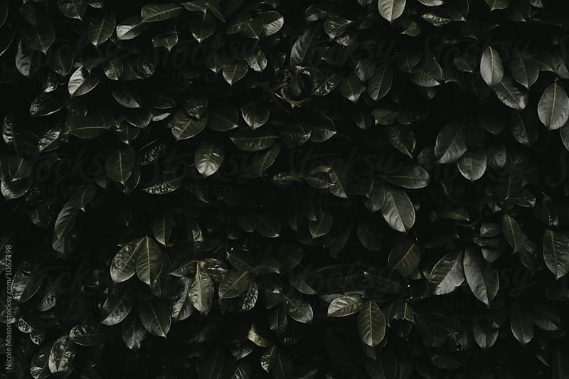 dark green leaf plants in overcast light by Nicole Mason for Stocksy United