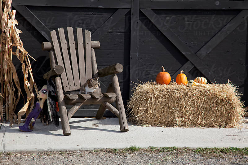 Cat on a Chair with Halloween Decorations by Sari Wynne Ruff for Stocksy United