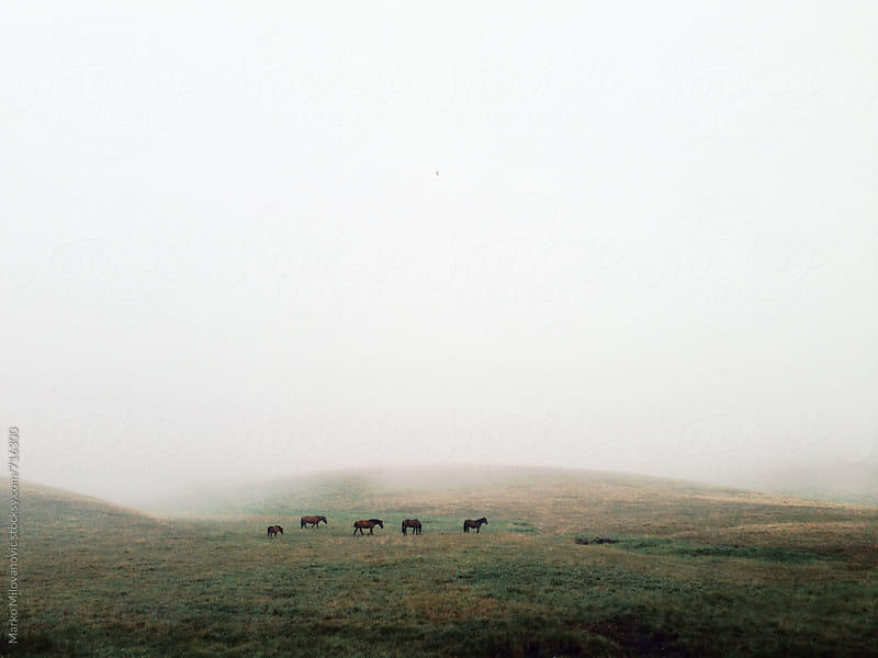Horses on the mountain in fog by Marko Milovanović for Stocksy United