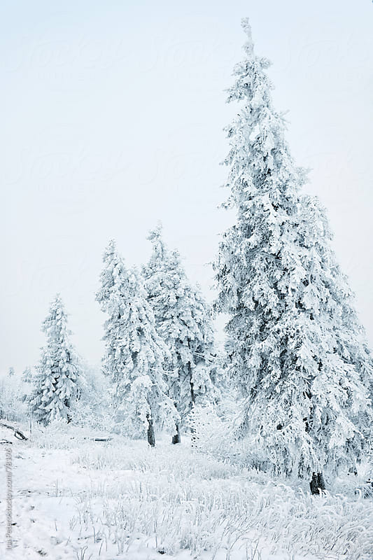 Winter landscape by Ina Peters for Stocksy United