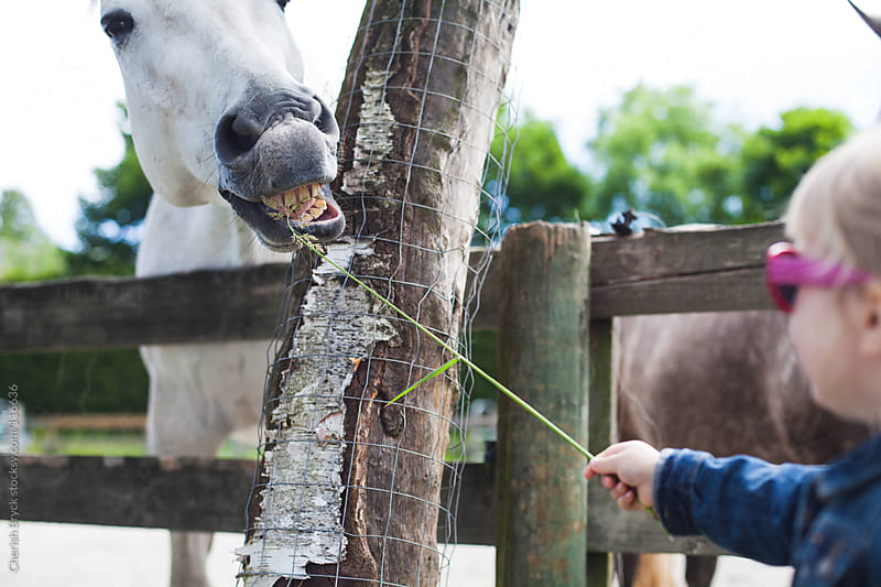 Little girl feed horse some grass. by Cherish Bryck for Stocksy United