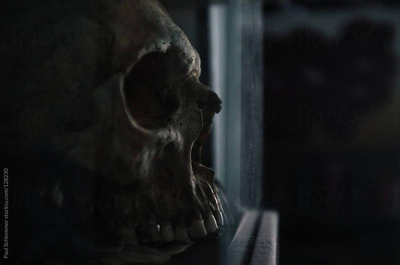 Human skull by Paul Schlemmer for Stocksy United