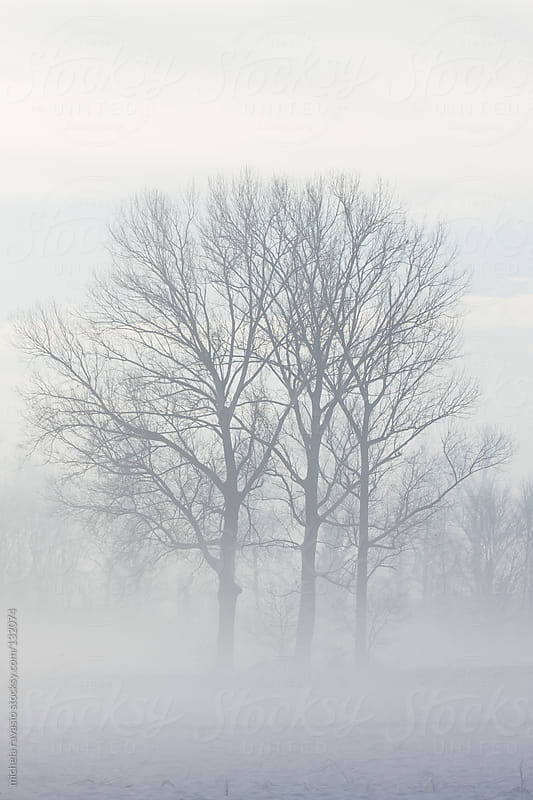 Trees in the mist by michela ravasio for Stocksy United