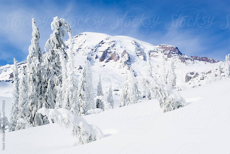 Winter wonderland at Rainier by Mark Windom for Stocksy United