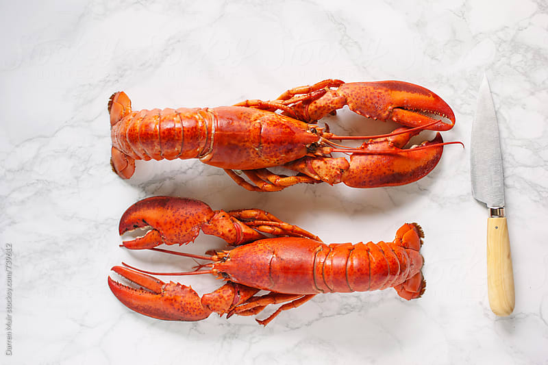 Two cooked lobsters.  by Darren Muir for Stocksy United