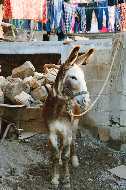 Donkey in Mexico  by Gary Parker for Stocksy United