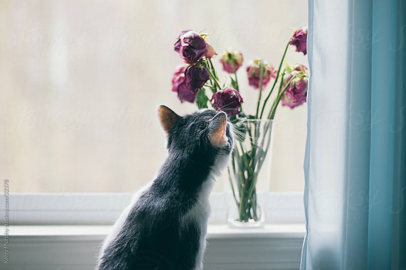 Curious kitten smelling pink flowers by Kerry Murphy for Stocksy United