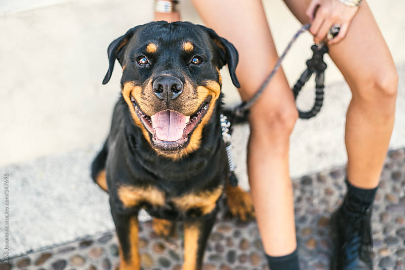 Dog looking at the camera while sitting with his owner by Jovo Jovanovic for Stocksy United