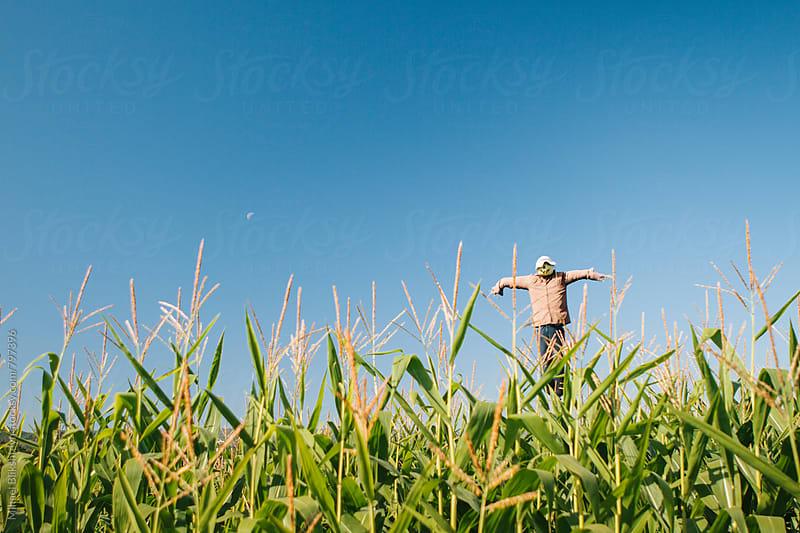 Scarecrow in a winter jacket in a corn field by Mihael Blikshteyn for Stocksy United