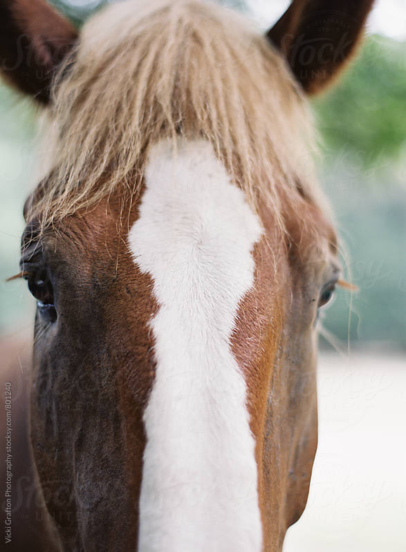 Horse Close Up by Vicki Grafton Photography for Stocksy United