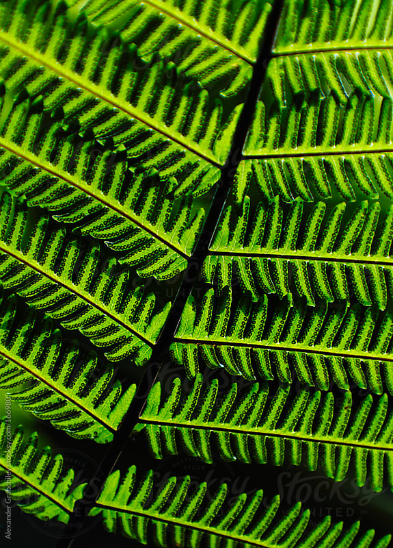 Green Fern Leaf Texture by Alexander Grabchilev for Stocksy United