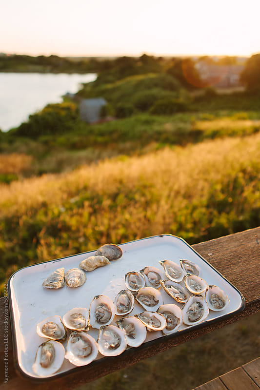 Oysters on Tray Martha's Vineyard Island, Massachusetts by Raymond Forbes LLC for Stocksy United