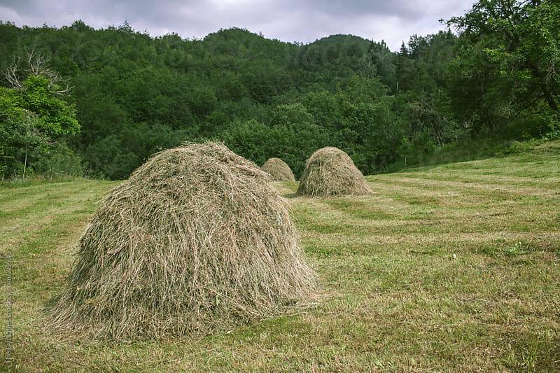 Rural scene by Zocky for Stocksy United