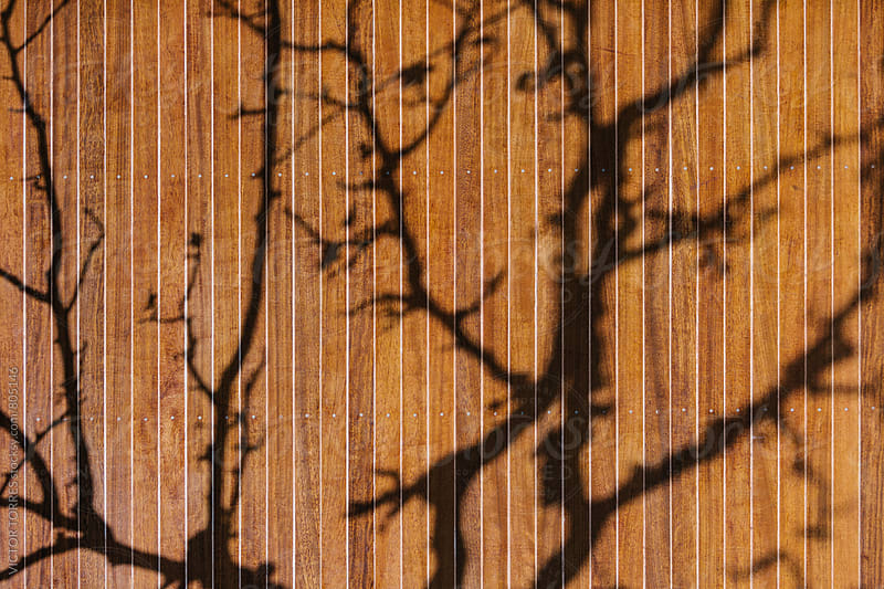 Tree Shadow on a Wooden Wall by Victor Torres for Stocksy United