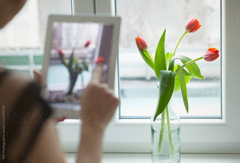 Taking photos of flowers with a tablet PC. by W2 Photography for Stocksy United