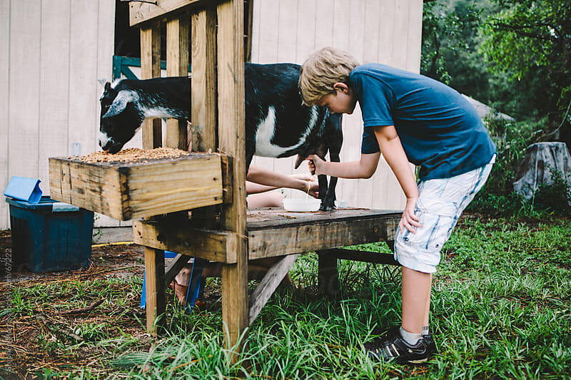 Boy Milking a Goat by Stephen Morris for Stocksy United