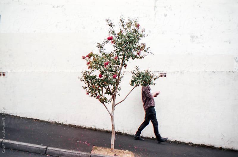 Tree head by Kara Riley for Stocksy United
