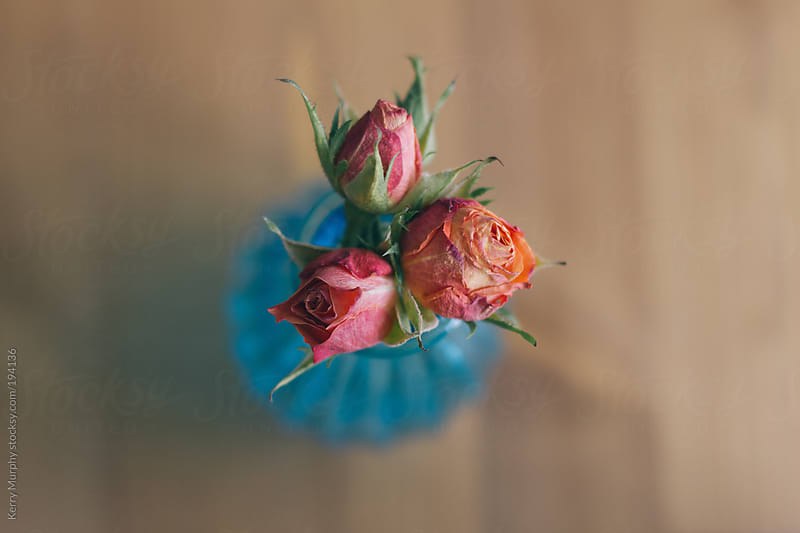 Looking down on blue vase with three pink tea roses by Kerry Murphy for Stocksy United
