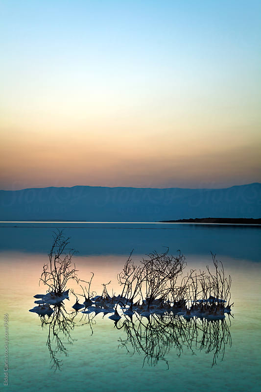 Dead Sea Sunrise - Withered Bushes at Dawn by Eldad Carin for Stocksy United