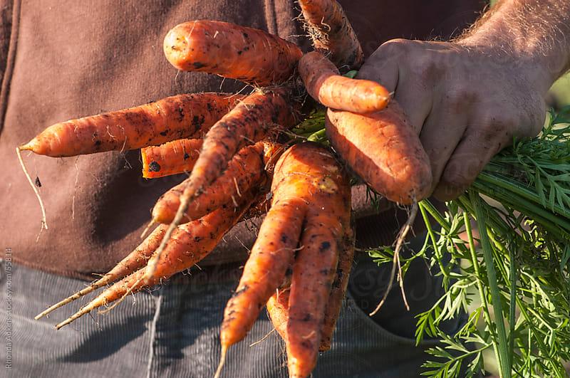 Farmer holding freshly picked carrots by Rhonda Adkins for Stocksy United