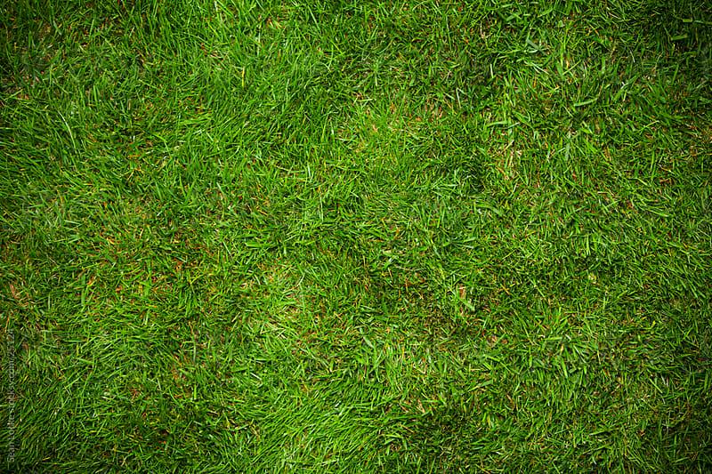 Grass: Grassy Background by Sean Locke for Stocksy United